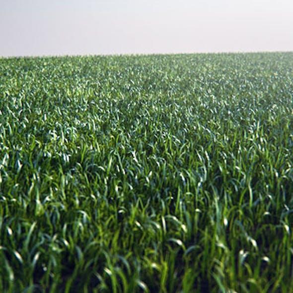 Real Grass Setup - VrayFur C4D