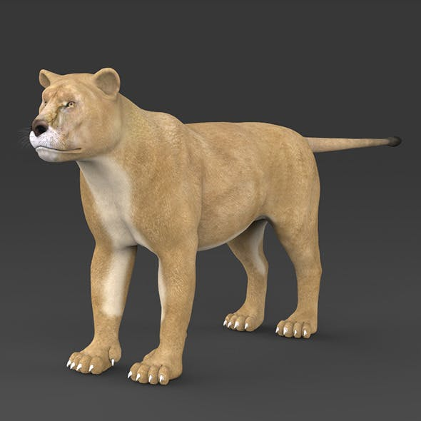 Realistic Lioness