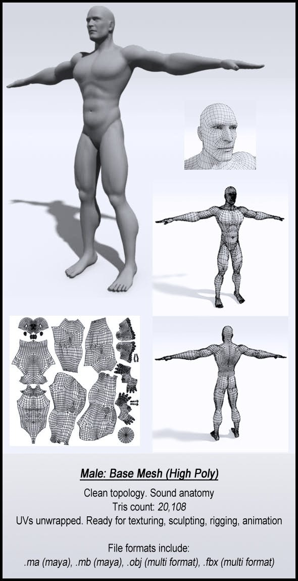 Male: Base Mesh (High Poly) - 3DOcean Item for Sale