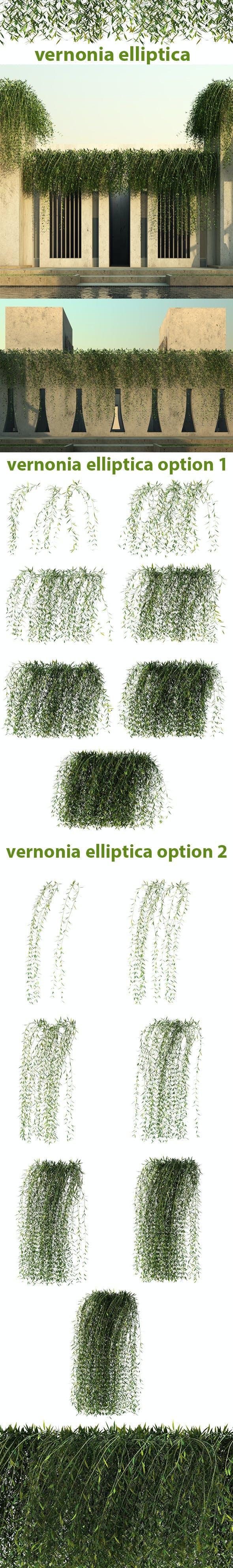 Vernonia Elliptica - 3DOcean Item for Sale