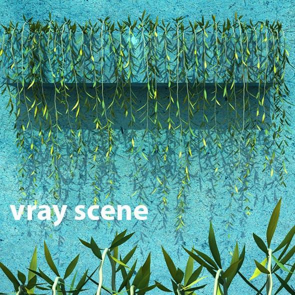 Vernonia Elliptica Vol. 2