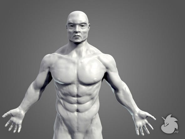 Muscular Base Mesh - 3DOcean Item for Sale