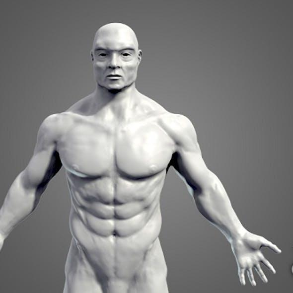 Muscular Base Mesh