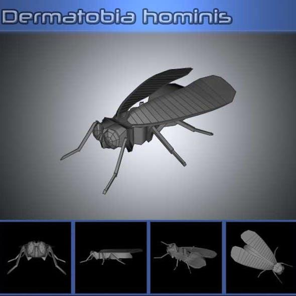 Dermatobia Hominis