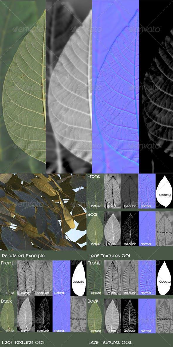 Walnut Leaves Textures - Juglans Regia - 3DOcean Item for Sale